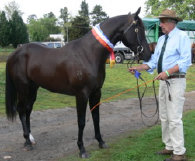 Stellarpark Rockstar and Cliff Davis of Hardrock Stock Horses